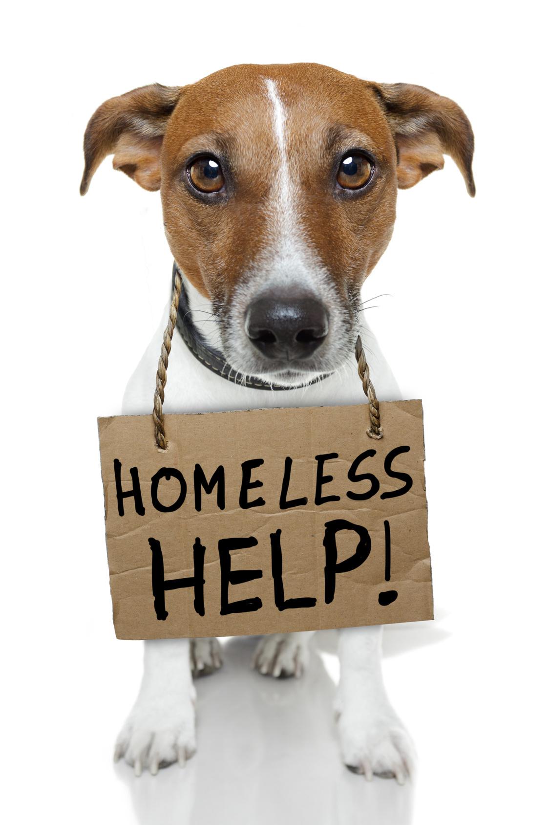 Donating Dog Food Homeless